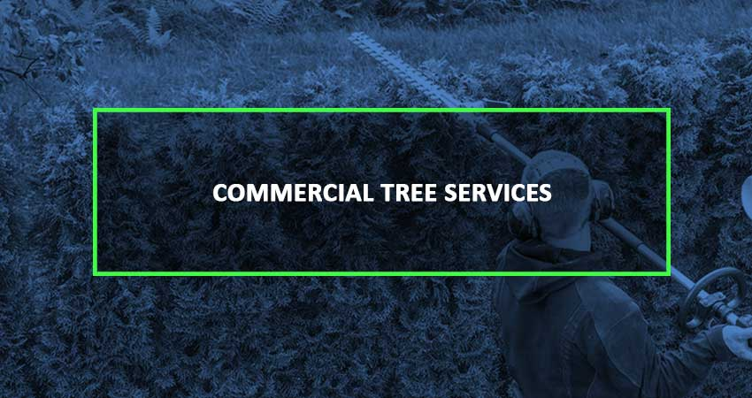 commercial-service-blue