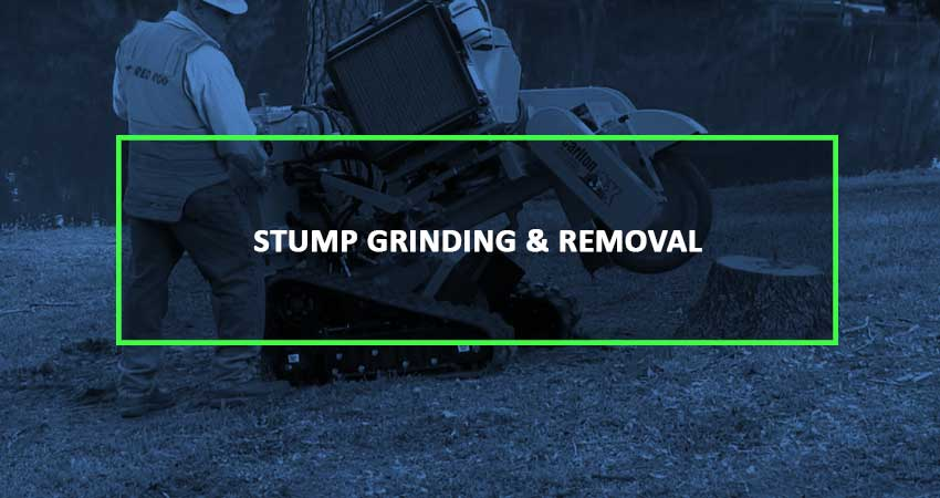 stump-grinding-blue